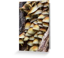 Sulphur Tuft mushrooms (Hypholoma fasciculare) growing on a tree trunk. Greeting Card