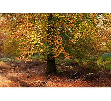 Autumn Colours on Cannock Chase Photographic Print