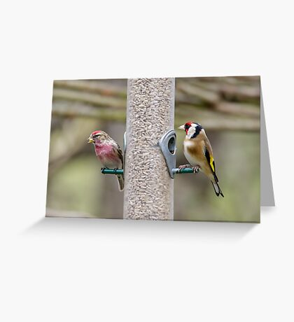 Lesser Redpoll (Carduelis caberet) and Goldfinch (Carduelis carduelis) on a bird feeder full of sunflower hearts. Greeting Card