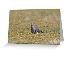 Male Common cuckoo (Cuculus canorus) foraging in a field. Greeting Card