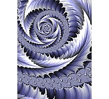 Spiral Leaf Abstract Photographic Print
