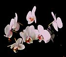 ORCHID 1 by Thomas Barker-Detwiler