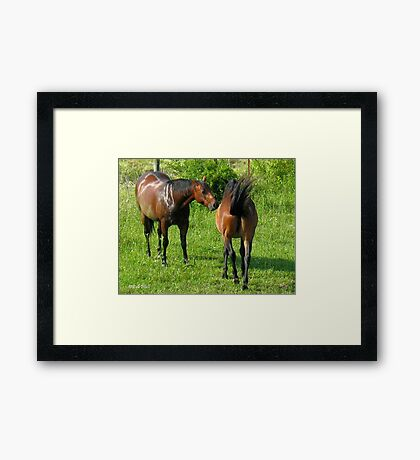 """Horses with Attitude no. 4, 'Don't Touch the Coat!'""... prints and products Framed Print"