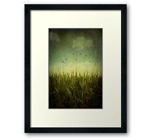 In the Field Framed Print
