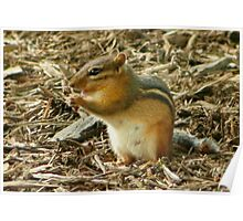 Chippy the Chipmunk Poster