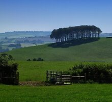 Copse   by Mortimer123