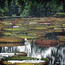 Waterlily Pond v.2 by tropicalsamuelv