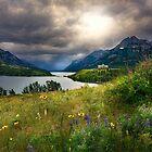 Waterton Wild Flowers by Patrick Kavanagh