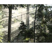 Sun through the Forest Photographic Print