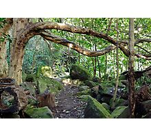 Puriri Grove Photographic Print