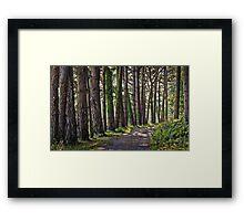 Whitford burrows woods Framed Print