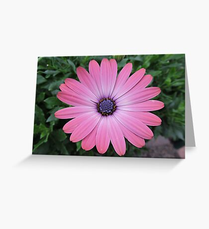 May I Admire You Again Today? Greeting Card