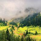 Sunny Valley by Svetlana Sewell