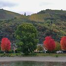 A Splash of Red on the Rhine by Larry Lingard-Davis