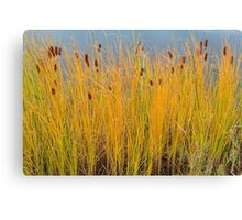 Colorful Cattails Canvas Print