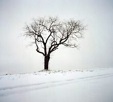 Old Tree in the Snow by DanielRegner
