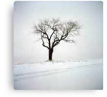 Old Tree in the Snow Canvas Print