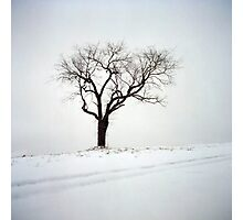 Old Tree in the Snow Photographic Print