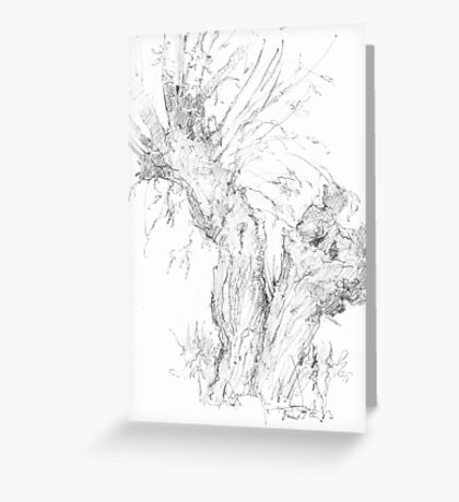 Weeping (Crack) Willow Tree Greeting Card