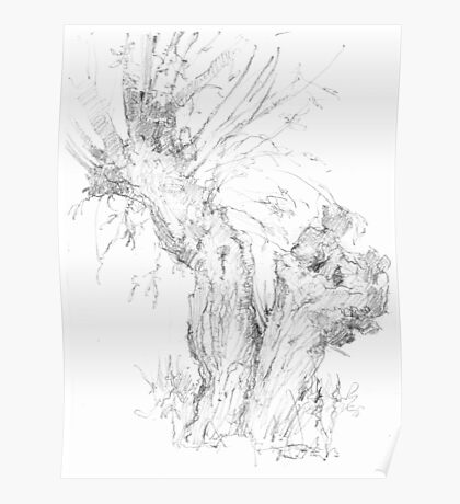 Weeping (Crack) Willow Tree Poster