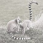Ring-Tailed Lemurs by Indea Vanmerllin