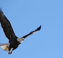 Eagle Taking Off by Carol Bock