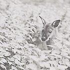 Wallaby by Indea Vanmerllin