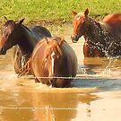 """""""Horses with Attitude no. 5, 'Hey, Youse Guys, I'm Still Talkin'""""... prints and products        by © Bob Hall"""