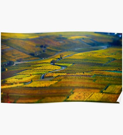 Aerial tilt-shift view of geometrical fields of grape, vinery in Alsace Poster