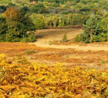 Ashdown Forest in Autumn Sticker