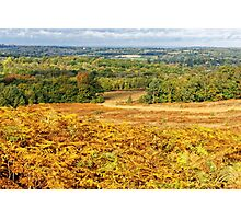 Ashdown Forest in Autumn Photographic Print