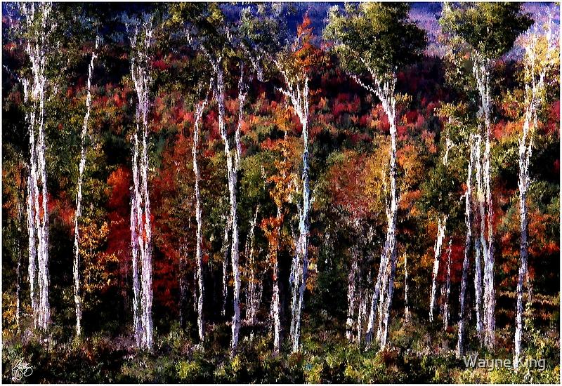 Birch Tapestry by Wayne King