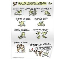 How to Identify Warblers Poster