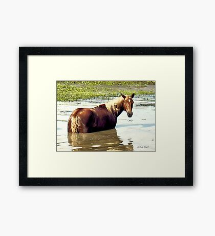 """Horses with Attitude, No. 2, ""What You Lookin' At?'""... prints and products Framed Print"