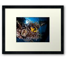 Under water photography of a Red Sea Framed Print