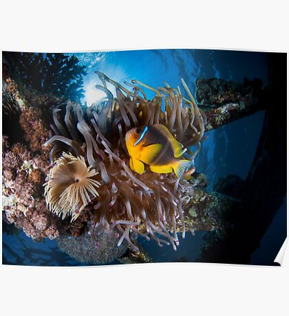 Under water photography of a Red Sea Poster