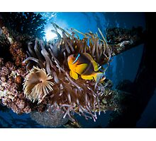 Under water photography of a Red Sea Photographic Print
