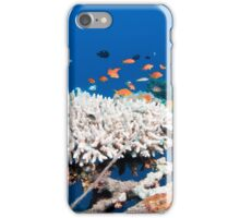 fish and scuba diver at a coral reef, Photographed at 10m, Red Sea, Eilat, Israel  iPhone Case/Skin