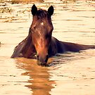 """""""Horses with Attitude, no.1, 'Come Out Here and Say That'""""... prints and products by © Bob Hall"""