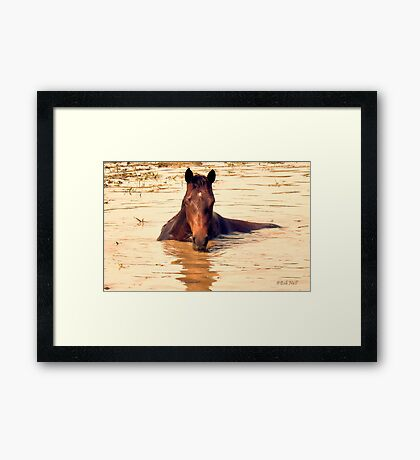 """Horses with Attitude, no.1, 'Come Out Here and Say That'""... prints and products Framed Print"