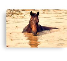 """Horses with Attitude, no.1, 'Come Out Here and Say That'""... prints and products Canvas Print"