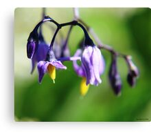 Deadly Nightshade Flower Canvas Print