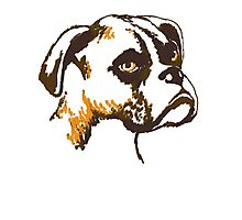 Boxer Dog Breed puppy pet Photographic Print