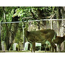 """Oh, Deer!""...prints and products Photographic Print"