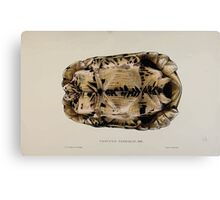 Tortoises terrapins and turtles drawn from life by James de Carle Sowerby and Edward Lear 012 Canvas Print