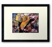 Hunting Moray Framed Print