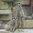 Meerkats On A Mission by MagsWilliamson