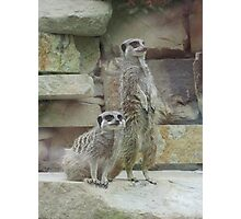 Meerkats On A Mission Photographic Print