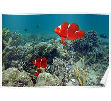 Anenome Fish Family Poster