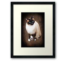 <º))))><U GOTTA B PLAYIN WITH YOUR OWN DING-A-LING (SIAMESE CAT) <º))))><      Framed Print